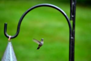 Little Hummingbird Friend